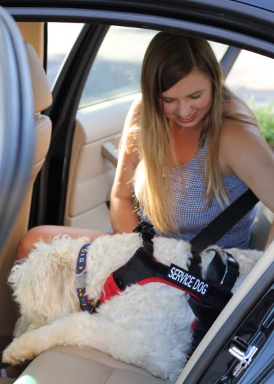 The Safest Way to Travel with Your Dog in the Car